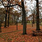 Schenley Park Pittsburgh, Fall Foliage by Kevin OShaughnessy