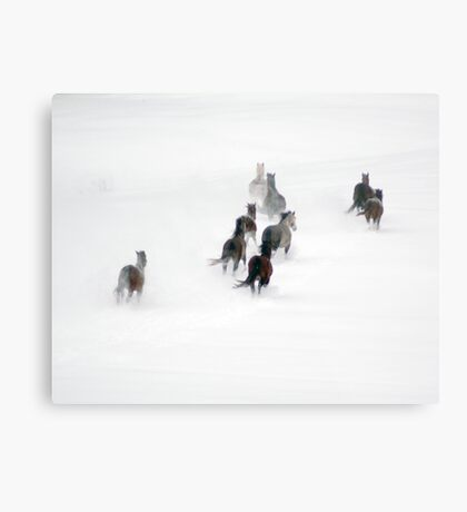 After the Blizzard 20 Metal Print