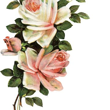 Pink Rose Watercolor Flower Illustration by junkydotcom