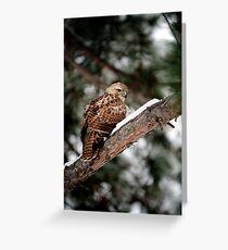 Prairie Falcon 3 Greeting Card