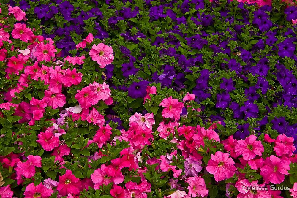 Bed of Flowers by Melissa Gurdus