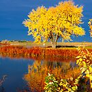 Holmes Lake in Autumn by doctorphoto