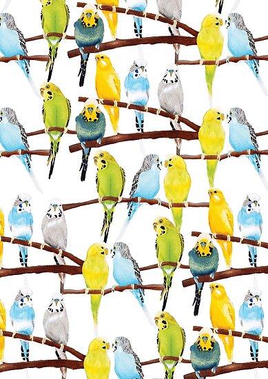 Wellensittich-Muster von Kelly Attenborough