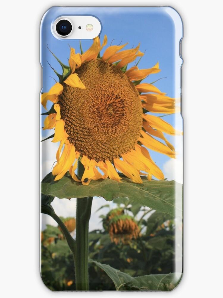 Kansas Coutry Sunflower Phone Case by ROBERTDBROZEK