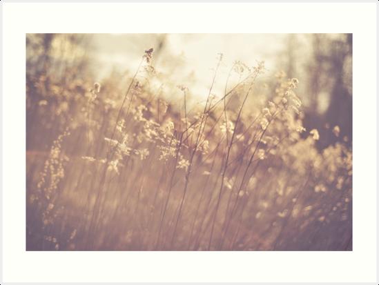 Dreamy Field by Brixhood