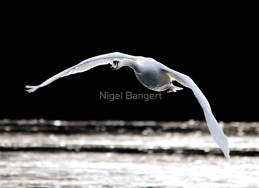 Defying Gravity by Nigel Bangert