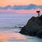 Cypress Tree, Headland Cove, Point Lobos by Maria Draper