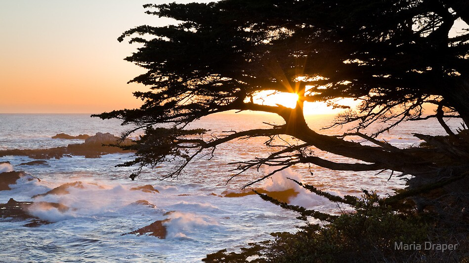 Headland Cove, Point Lobos, Carmel California by Maria Draper