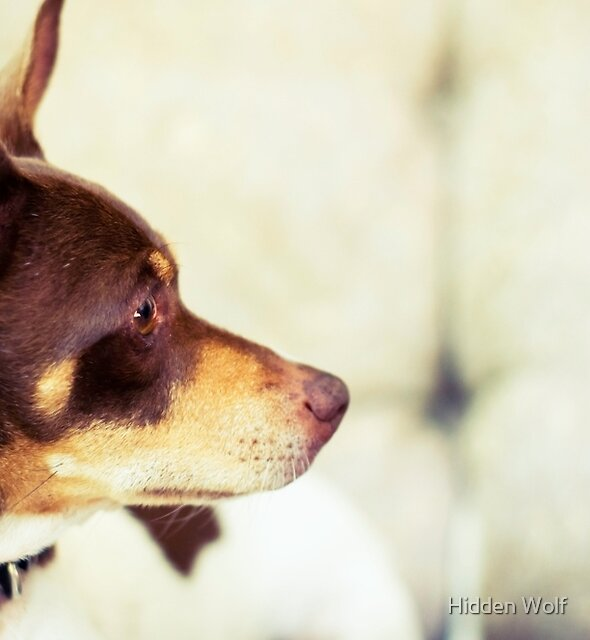 Red Dog by Amanda-Jane Snelling