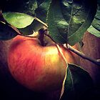 Gravenstein Apple by Barbara Wyeth