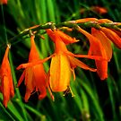 Orange Flowers by newbeltane