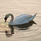Swan Lake by newbeltane