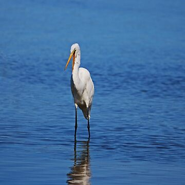 Great White Egret at Ding II by Michiale