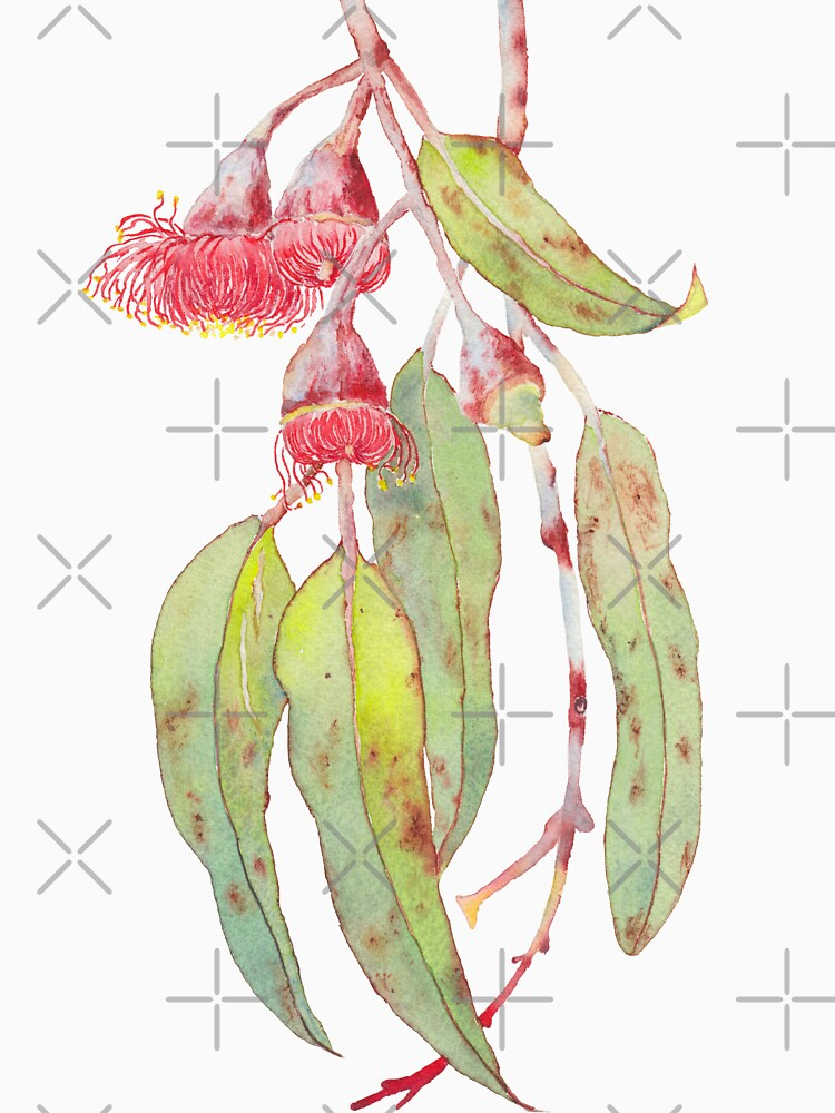 Flowering Silver Princess Eucalyptus Watercolour by zoyamakarova