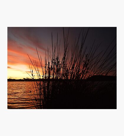 Through the reeds, the sun set reddens - Canning River, Perth, Western Australia Photographic Print