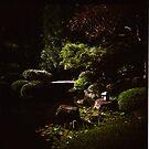 Brisbane Botanic Gardens by mewalsh