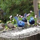 Bluey Feeding Frenzy by adbetron