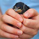 A Bird in the hand by EUNAN SWEENEY