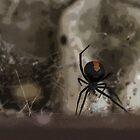 red back spider by MadmyrtleDesign