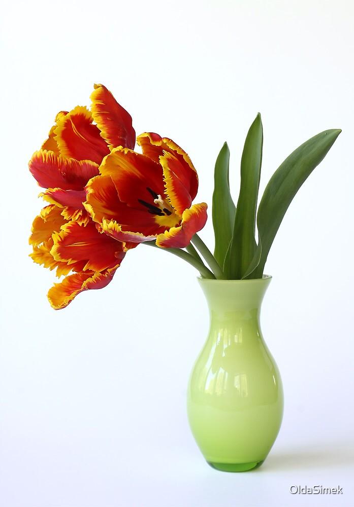 three parrot tulips in green vase by OldaSimek