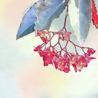 TROPICAL HANGING PINK BEGONIA by Shirley Kathan-Sayess