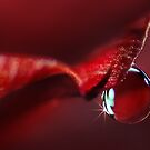 Cherry Red Drop by maf01