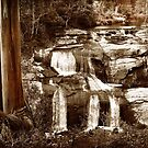 Waterfall, Tarra Warra National Park by Roz McQuillan