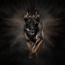 German Shepherd Dog - Running by k9printart