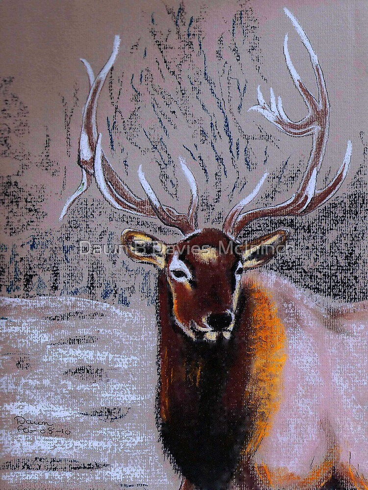 Stag by Dawn B Davies-McIninch
