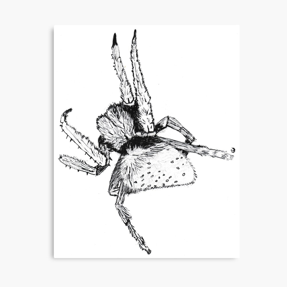 Trudi's Spider Canvas Print