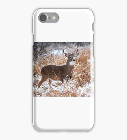 A Regal Stance - White-tailed deer Buck iPhone Case/Skin