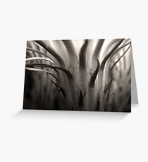 Cactus Bloom in Sepia Greeting Card