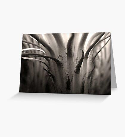 Cactus Bloom in Sepia Greeting Card