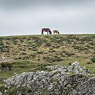 Asturcon,   Asturian pony by Svetlana Korneliuk