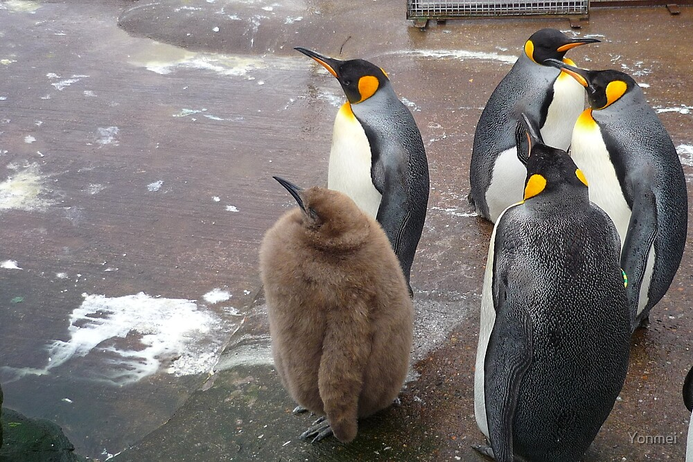 Edinburgh Zoo: baby penguin by Yonmei