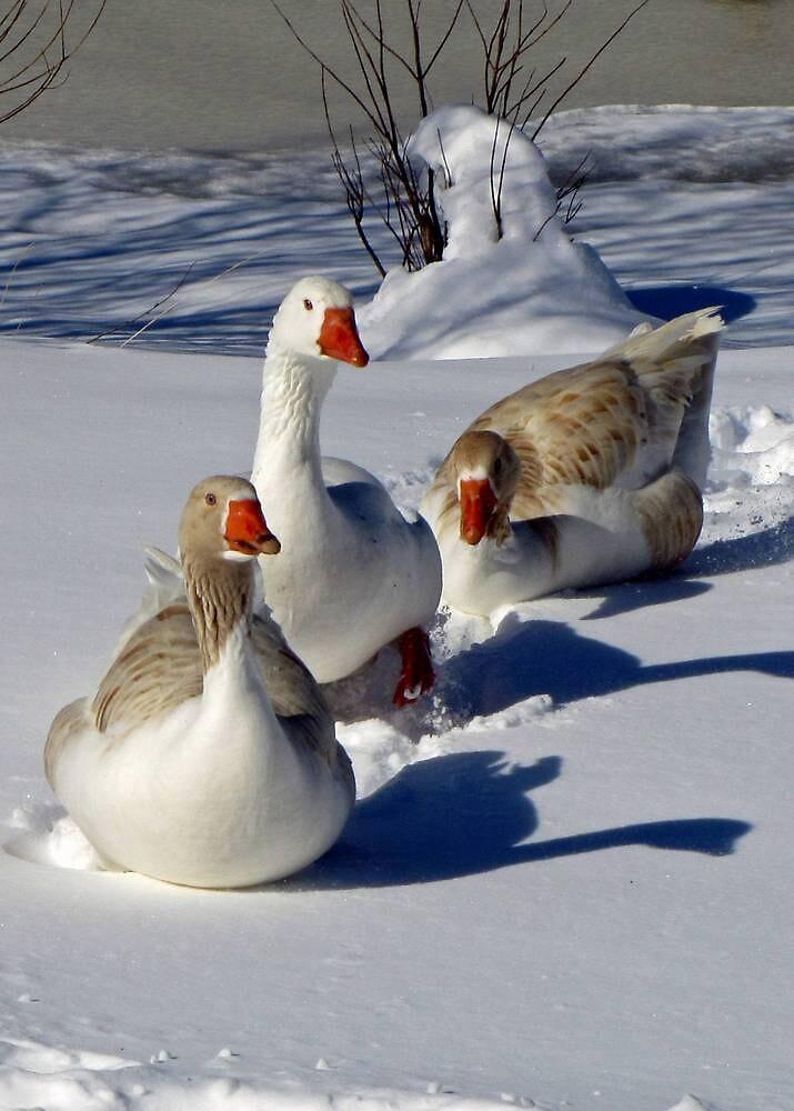 Walking in the Snow by Sviatlana