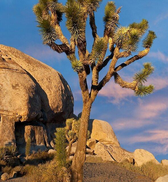 Joshua Tree at Cap Rock by Jeff Goulden