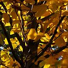 Wind Through the Tulip Poplar Tree by Lyle Hatch