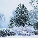 Affe Puzzle im Schnee von Paul Barnett