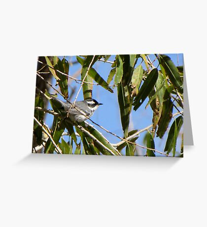 Black-throated Gray Warbler ~ Male Greeting Card