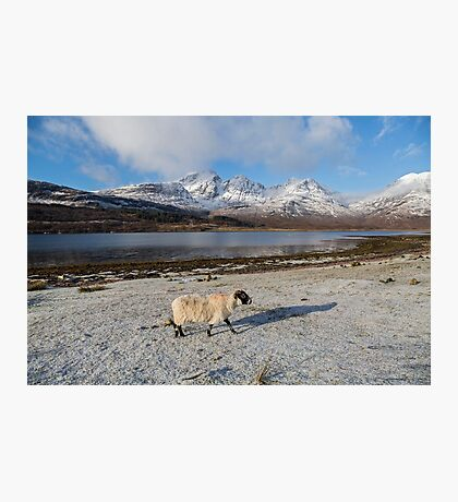 Bla Bheinn( Blaven) and a Blackface Sheep Photographic Print
