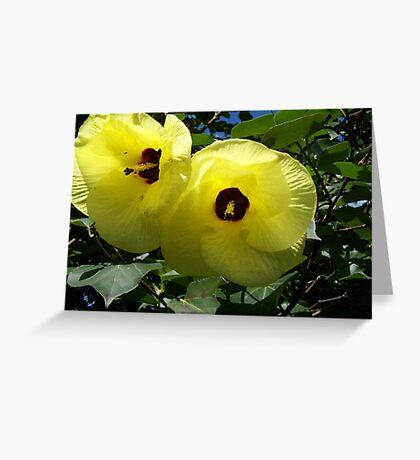 Native Hibiscus Greeting Card
