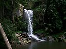 Curtis Falls - Mount Tambourine by Matthew Walmsley-Sims