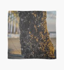 Barnacles scapes Scarf