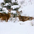 Winter Deer by Barbara  Brown