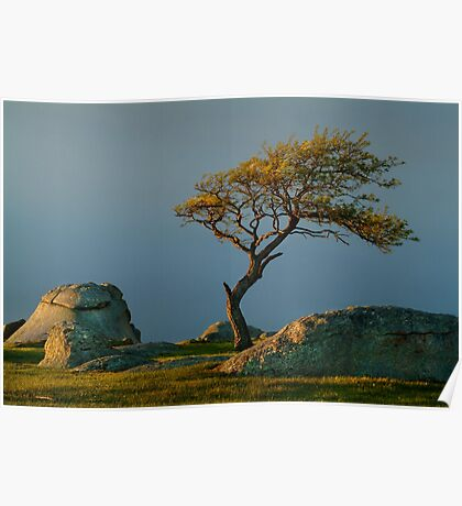 Dog Rocks, Batesford Victoria Poster