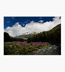 Lupin Valley Photographic Print