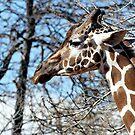 Geoffrey Giraffe by © Loree McComb