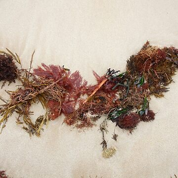 Seashore Ikebana 6 by beeden