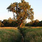 Creek Tree by Melody Ricketts